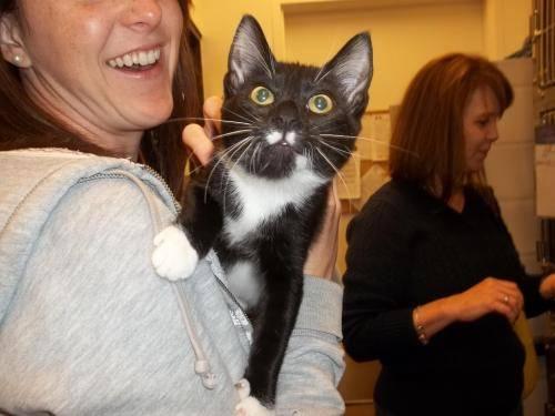 Domestic Short Hair - Mj - Medium - Baby - Female - Cat