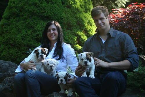AKC English Bulldog Puppies - Champion Bloodlines