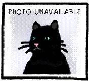 Domestic Short Hair - Orange - Casey - Medium - Adult - Female