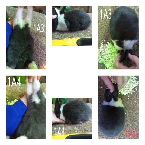 LARGE VARIETY OF RABBITS - MUST GO