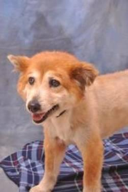 Chow Chow - Myrtle - Medium - Senior - Female - Dog