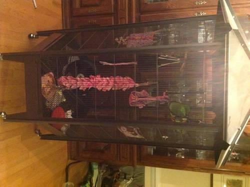 TWO SISTER SUGAR GLIDERS AND 6ft OCTAGON CAGE W/EXTRAS