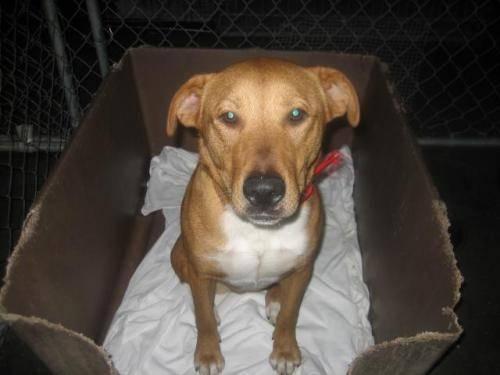 Terrier - Lexie - Medium - Adult - Female - Dog