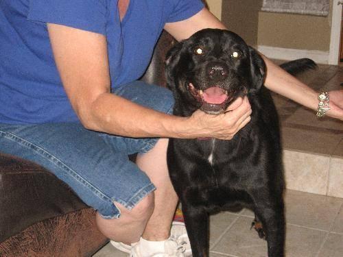 Husky - Marley - Large - Adult - Female - Dog