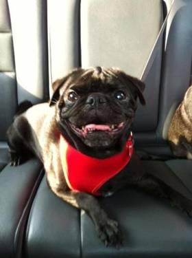 Terrier - Shane - Medium - Adult - Male - Dog