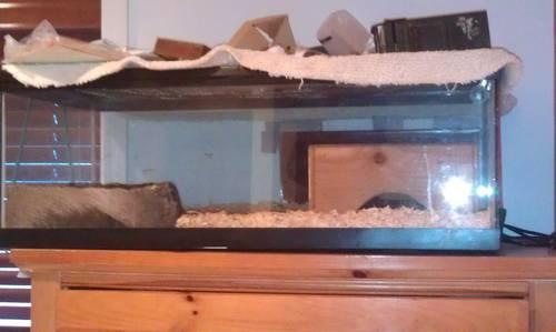 8 year old Ball Python and accessories for sale