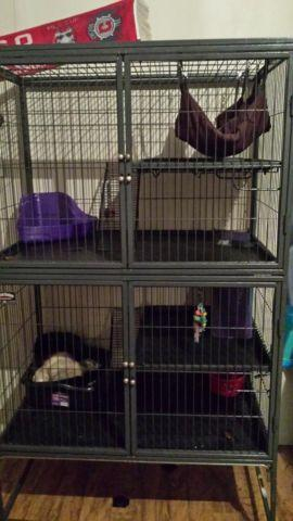 2 ferrets with cage and all accessories