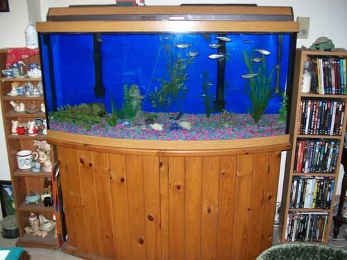 36 Gallon Bow Front Fish Aquarium W Stand Accessories