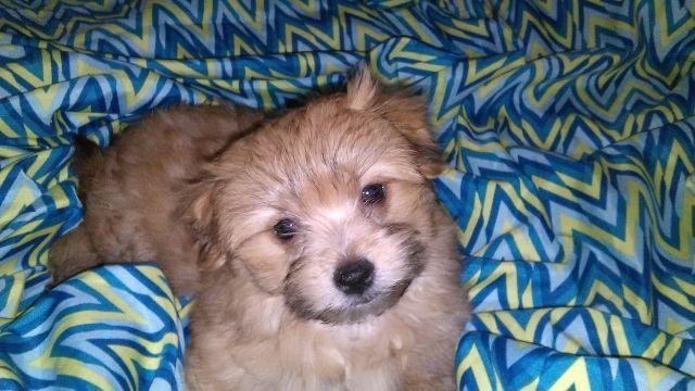 ***Adorable Small Mix Breed Pup***