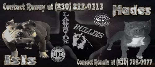 PR UKC BULLY PUPPIES