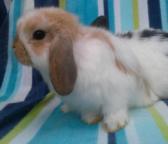 Sweet Baby Bunny