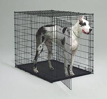 vision cage