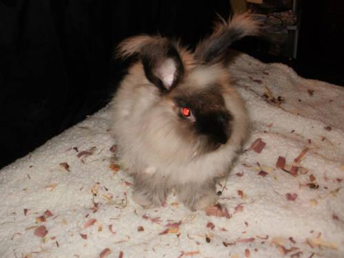 Bunnies 4 sale call/text 606-271-7844