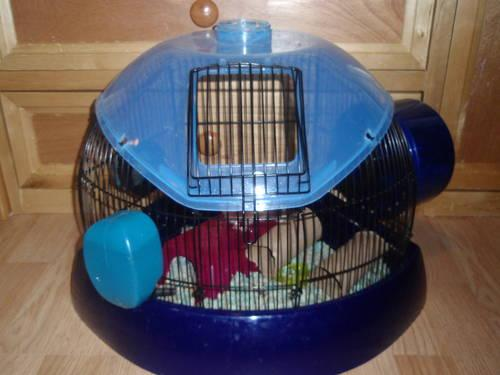 Large Macaw or Cockatoo cage