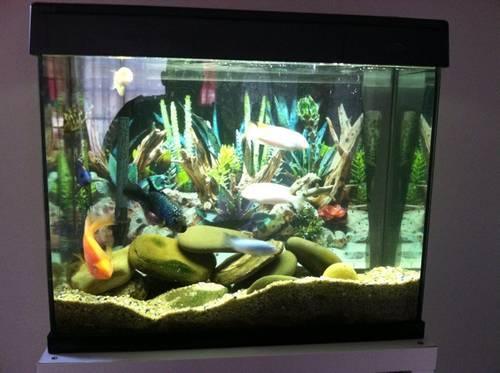 40 gallon eclipse fish tank for sale in norwalk for Eclipse fish tank