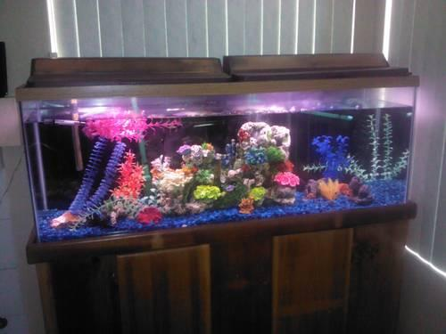 60 gallons glass fish Tank for Sale in Perris, California Classified ...
