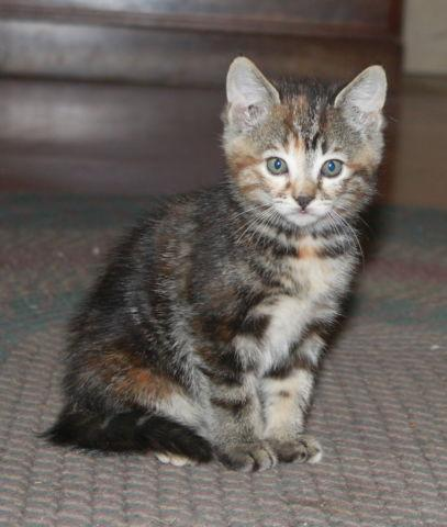 Beautiful Healthy Friendly Kittens available for adoption- 8 weeks old