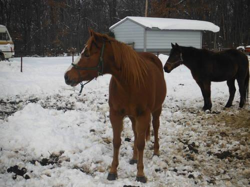 Some horses for sale
