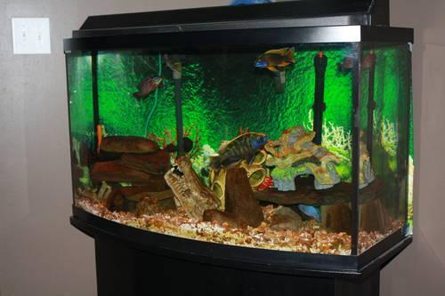 220 Gallon Rectangular Glass Fish Tank