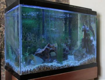 20 gallon fish tank with fish 2 heaters 2 filters and for 5 gallon fish tank heater