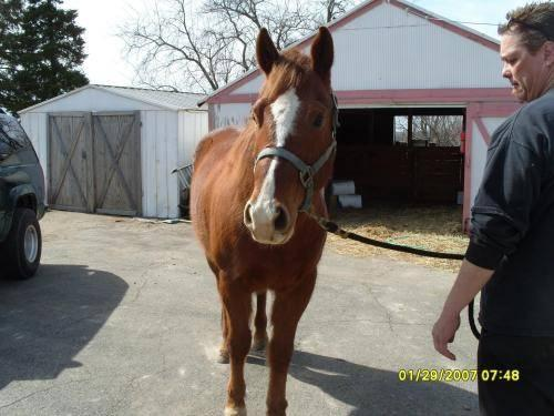 horse needs good home asap