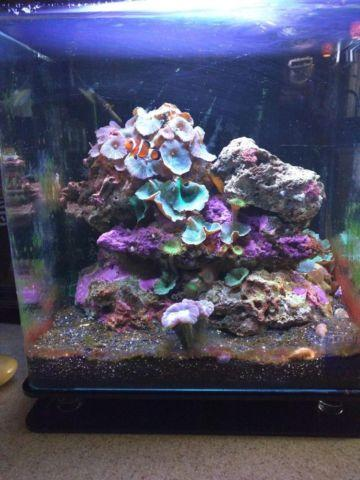 Nuvo 8 gal saltwater Innovative Marine Figi Rock black sand