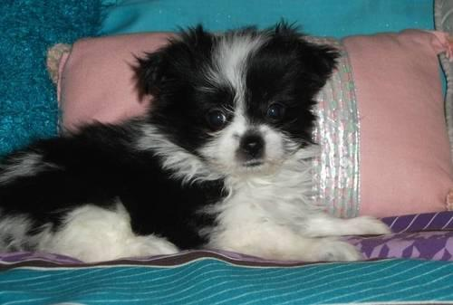 400 seller date time 10 mar 04 53 p m est type pets for sale private