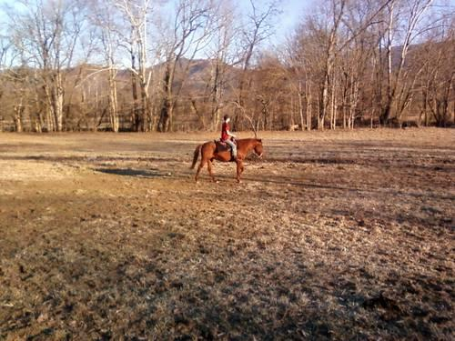 Kids/beginner QH mare. Trail rides, not spooky, shown by child