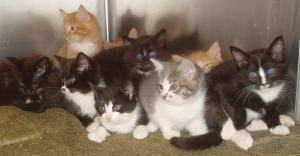 Kittens Galore!!! Adorable Variety of Precious Kitties!