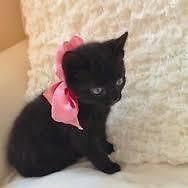 14 week old kittens
