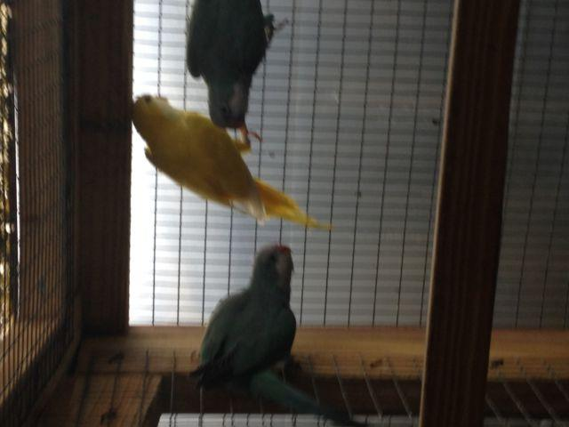 Tamed birds and proven pairs