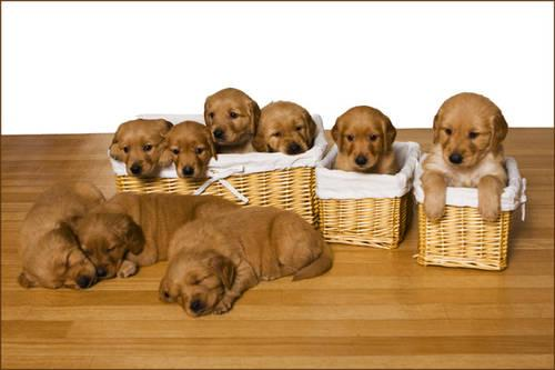 daugs puppy