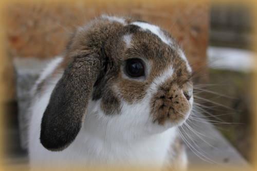 Petsfit Bunny CagesOutdoor Rabbit Hutch with Run 315 x