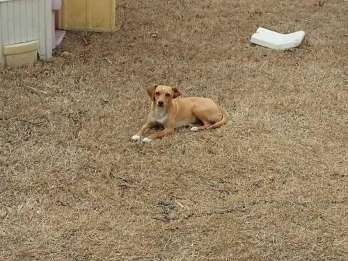 Adorable Small Dog Found and Ready for Good Home