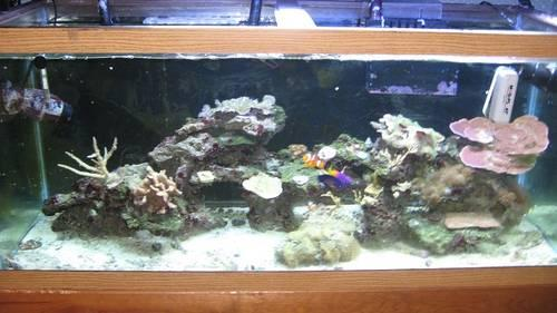 75 gallon squarium, stand, live rock, coral for sale