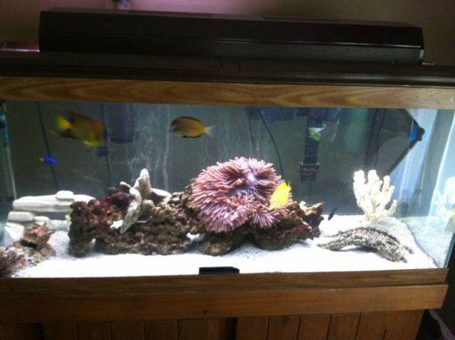 Innovative Marine Nuvo 8 gal saltwater fish tank aquarium