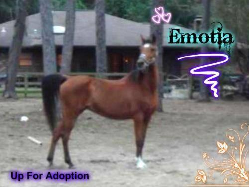 Arabian - Emmie - Medium - Senior - Female - Horse