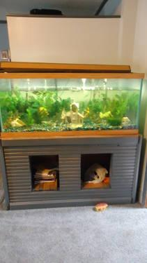 80 gallon fish tank with fish