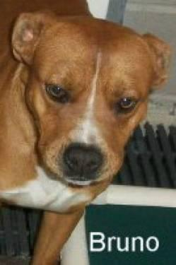 Boxer - Bruno Very Urgent Out Of Time - Medium - Young - Male