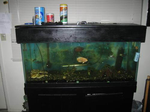 75 Gal Fish Tank with all acc