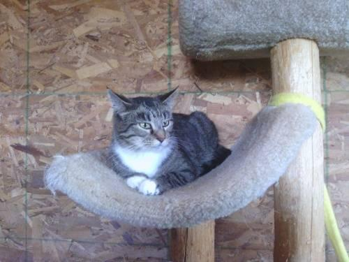 Tabby - Brown - Princess (great With Kids) - Small - Young