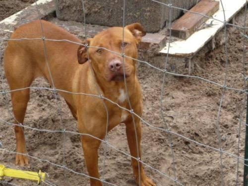 Terrier - Heniz - Medium - Young - Male - Dog