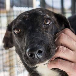 Terrier - Logan - Medium - Young - Male - Dog