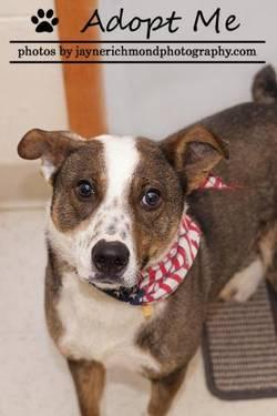 Terrier - Buster - Medium - Young - Male - Dog