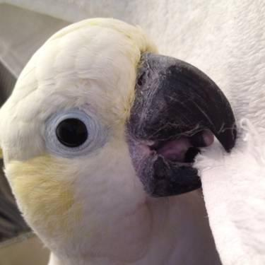 A&E Aviary for your Parrot